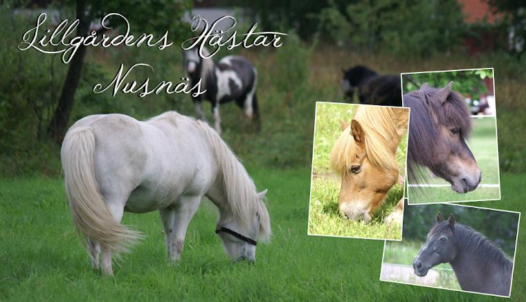 Lillgårdens Hästar