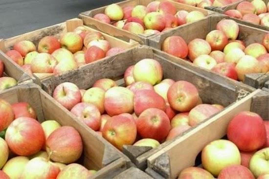 Dua Jenis Epal Disekat Masuk Ke Malaysia