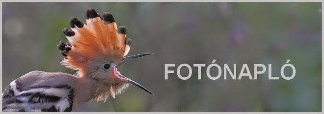 fotónapló