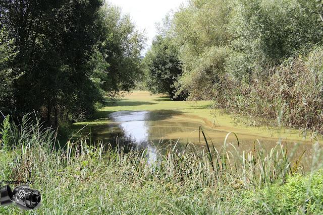 Um belissima fotografia do Pantano que rodeia a Pateia, com lindos caminhos cheios de descobertas.