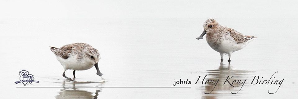 John's Hong Kong Birding