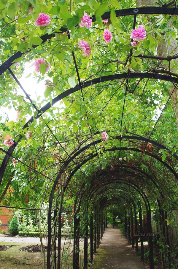aliciasivert, alicia sivertsson, england, london, lord leighton, arcade, roses, rose, tunnel, path, walk, stroll, arkad, rosenarkad, klätterväxter, klätterrosor, ros, rosor, växtlighet, promenad, gång