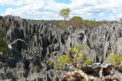غابة الصخور