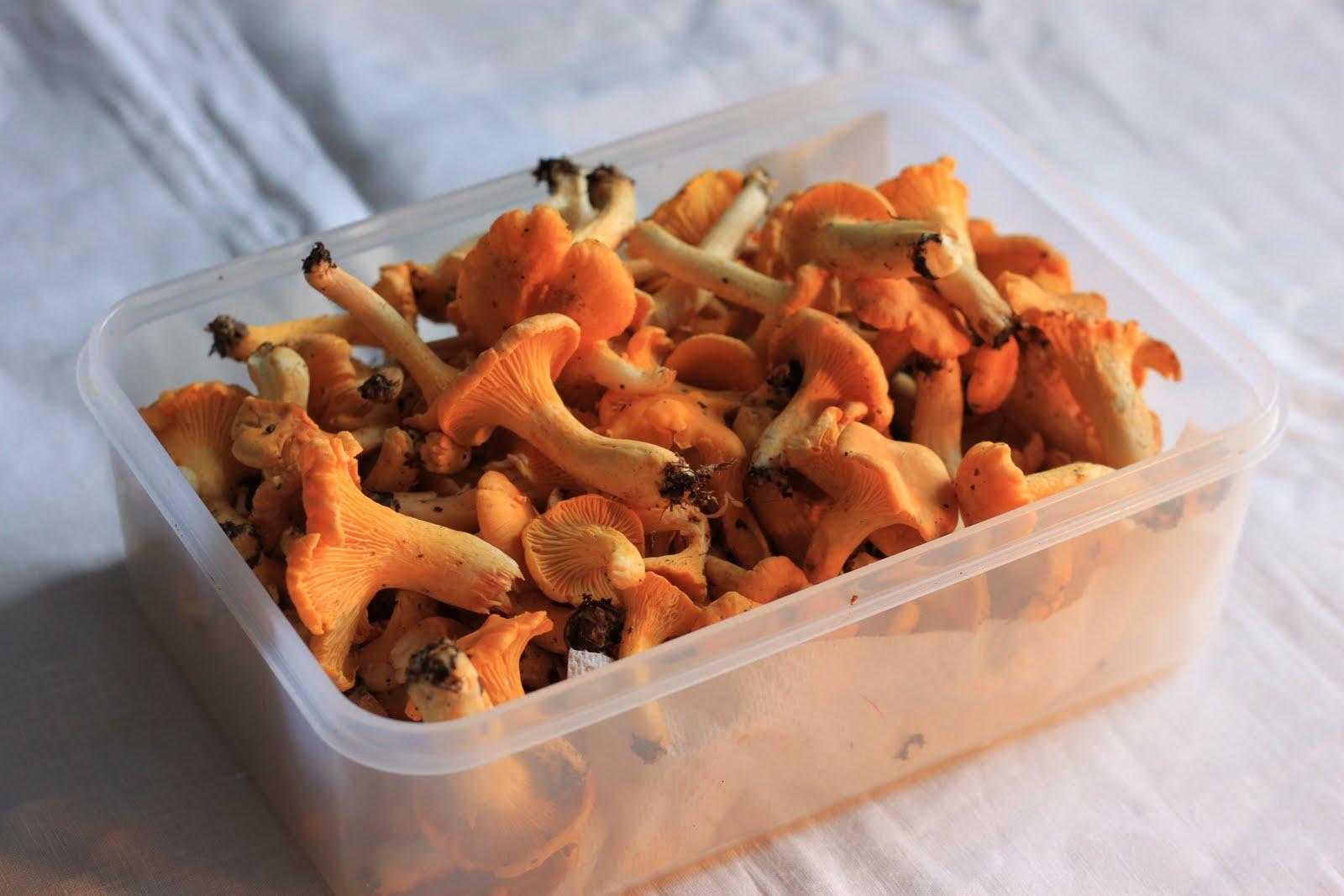 Twice Bitten: Mushroom hunting part 2: the ubiquitous wild mushroom ...