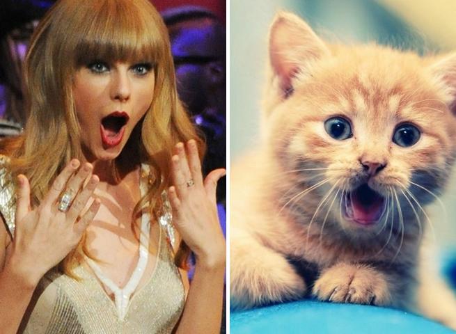 Taylor Swift gato