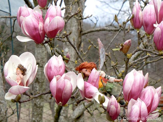 fate e magnolia