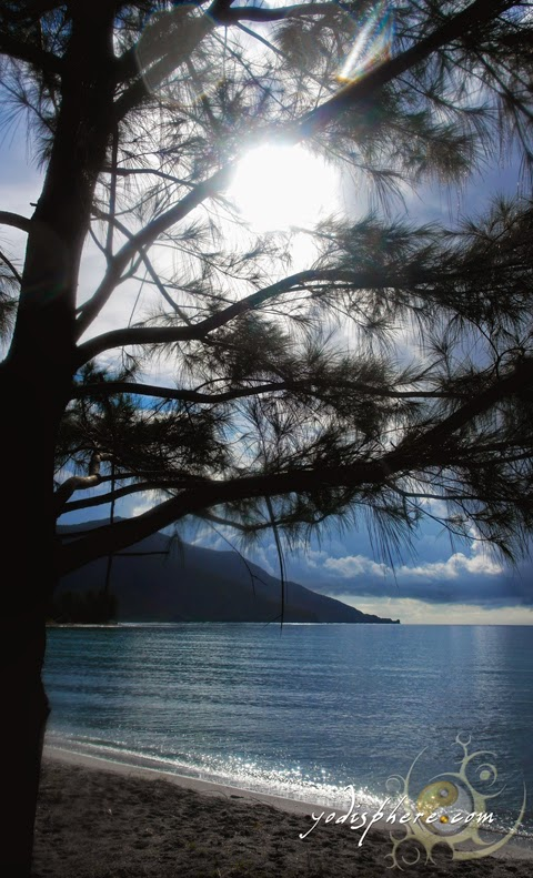 Sun shining against the pine trees along the beach of Silanguin Cove hover_share