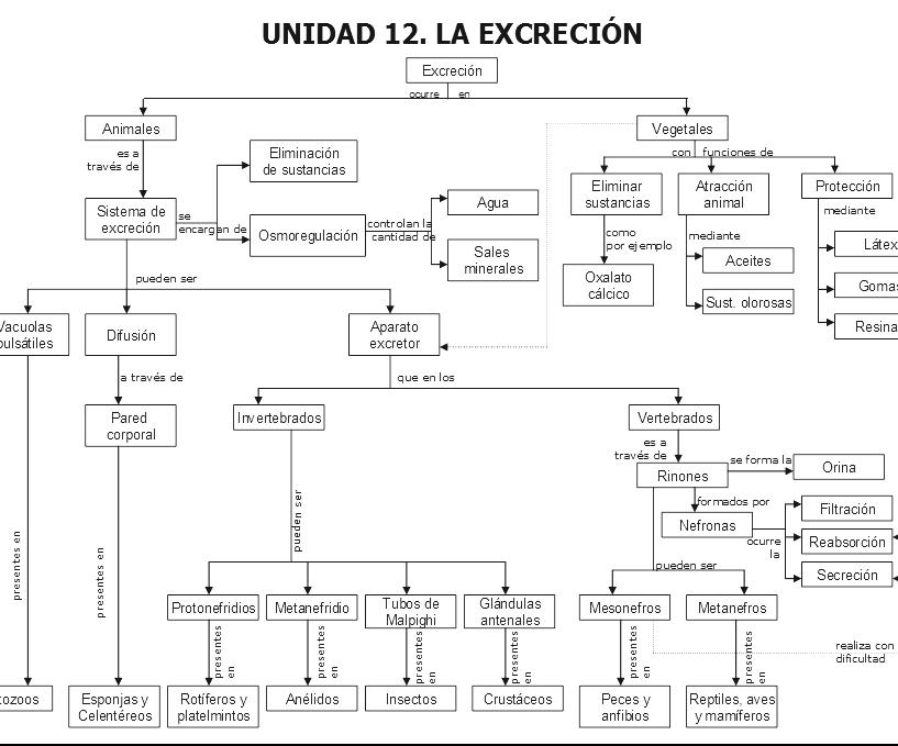 QUIMICA DE LA VIDA: RESPIRACIÓN Y EXCRECION