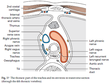Understanding the Clinical Guide to Anatomy: The Thorax ...