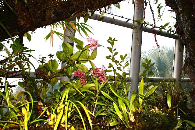 National Orchid Garden at Singapore Botanic Gardens