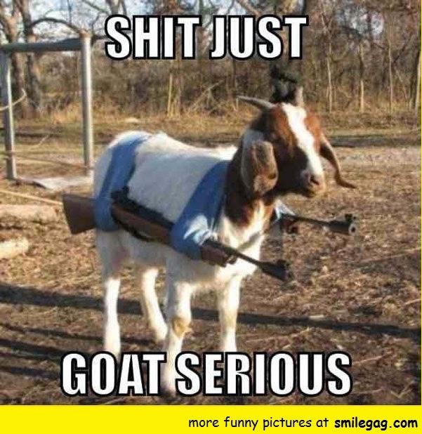 Goat%2Bmeme%2B1 10 goat memes to cheer you up,Cheer Up Meme
