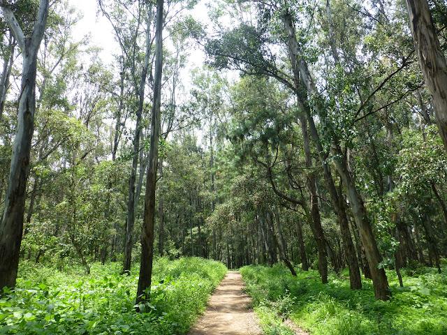 Bosque Los Colomos, Guadalajara