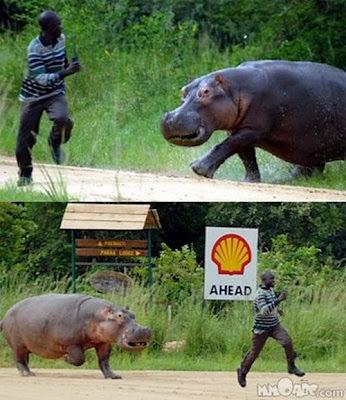 Animales ahuyentando a las personas - WTF - 4