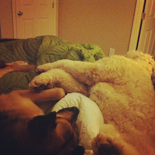 German Shepherd and Goldendoodle dogs sleeping on the bed