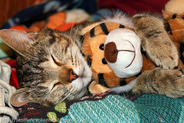 Cat sleeping in toy.