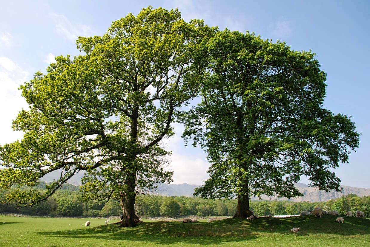 Happy National Arbor Day