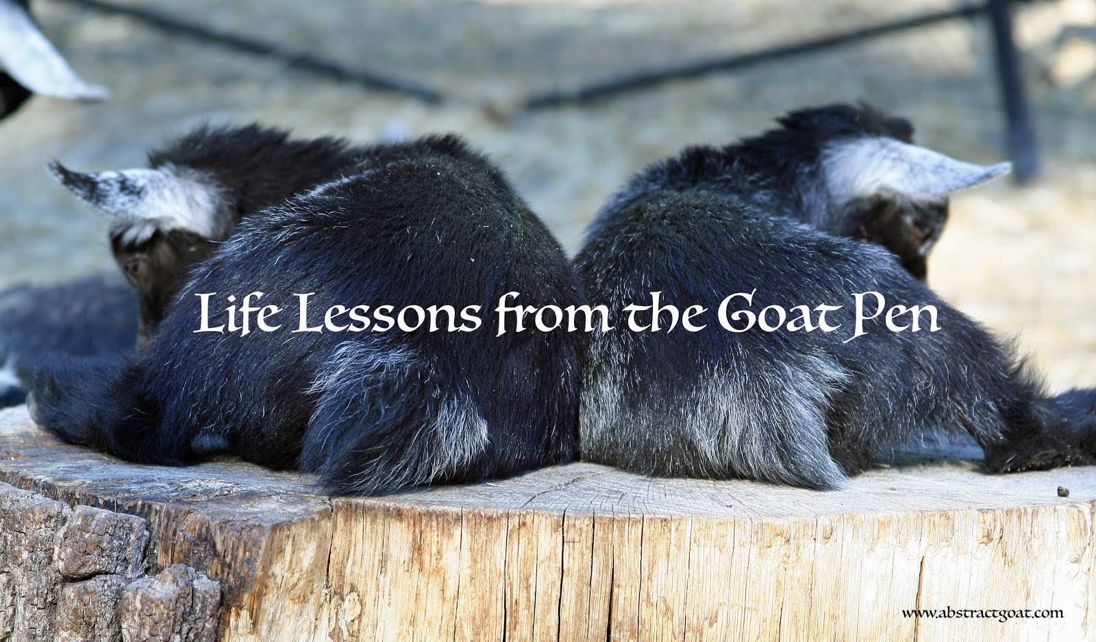 Life Lessons from the Goat Pen