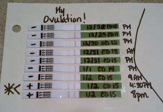 Clomid Ovulation Day 15