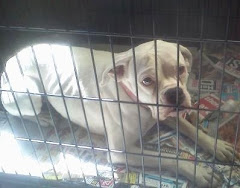 10/25/11 Female Boxer, 2 Dashunds, Terrier Mix Others Rural GA Shelter Need Help.