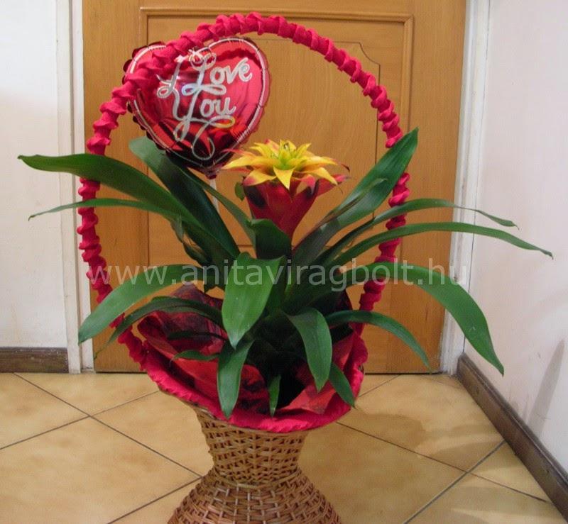 http://webshop.anitaviragbolt.com/guzmania-kosarban-valentin-napra-reszletek