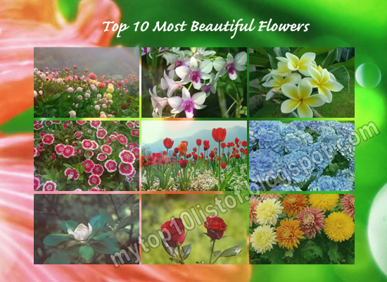 Top 10 Most Beautiful Flowers