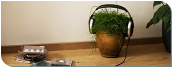 how does music affect plant growth research paper Does music affect the growth of plantspptx are plants affected by music how can a research to know if music affects plant growth be done.