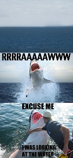 excuse me i was looking at the water shark, animals funny pictures, animal funny pictures, excuse me shark