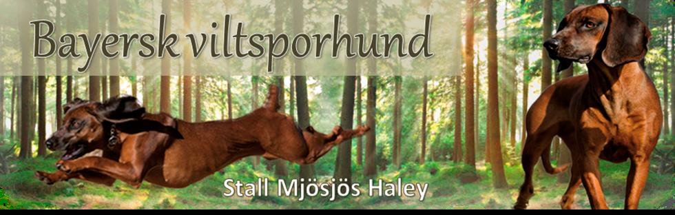 Viltsporhund, jakt og ettersøk