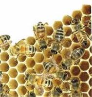 Madu asli aman untuk penderita kencing manis