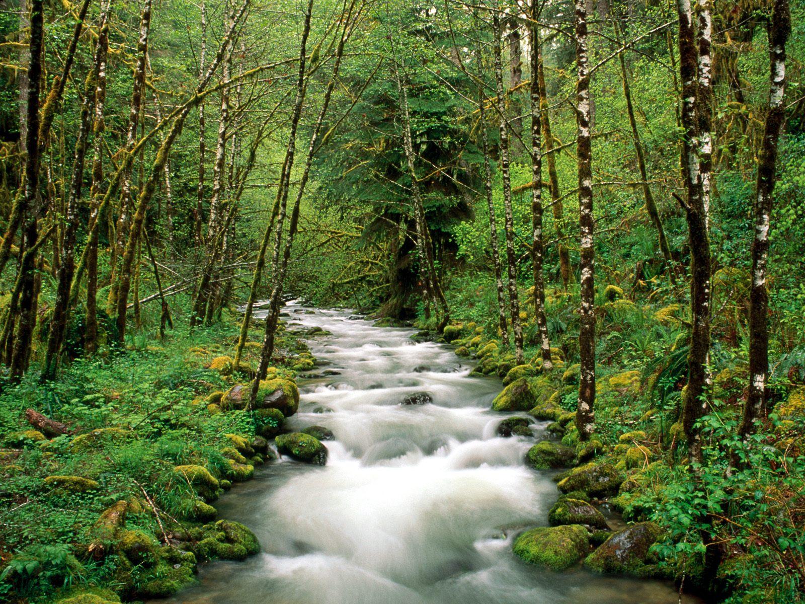 http://4.bp.blogspot.com/-Si3fY944oqE/UGUei5pUb-I/AAAAAAAAHdg/zEwQvMctFdA/s1600/Nature-wallpaper-82.jpg