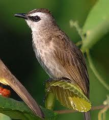 Cara Menjinakkan Burung
