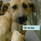 BlogAssado, fotos de cachorrinhos fofinhos, mortadela do chaves, carinha de do do cão abandonado