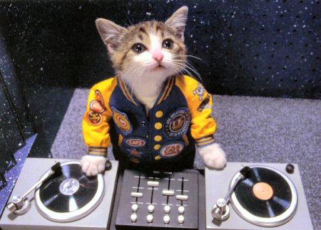 cat+dj.jpg