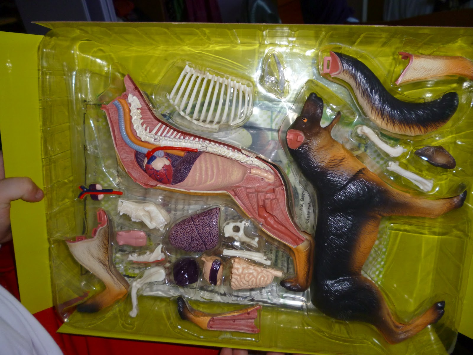 Madhouse Family Reviews: Revell X-ray Dog Anatomy Model review