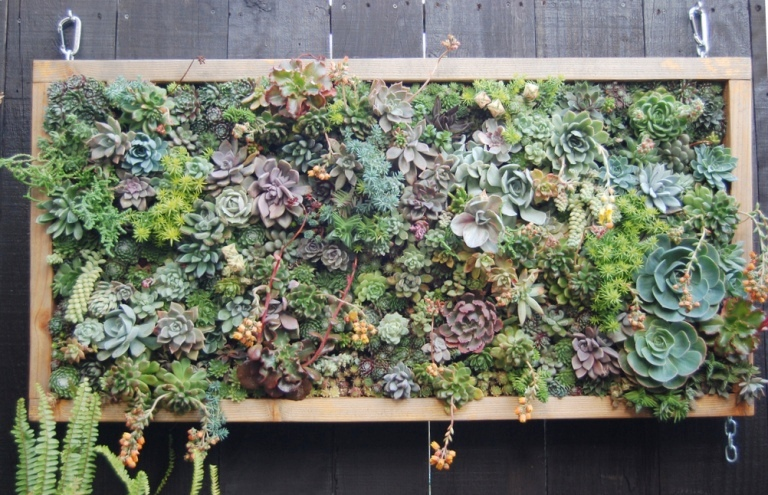 Delightful Low Maintenance Succulent Vertical Garden