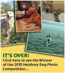 Helsbury Dog Photo Competition 2015