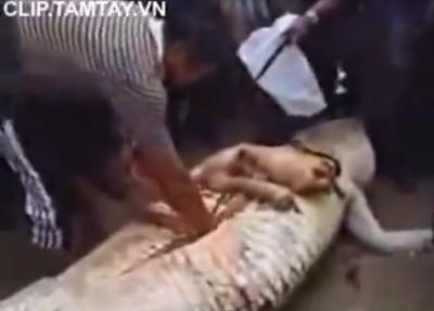 Clip kinh dị - Cá sấu ăn thịt người