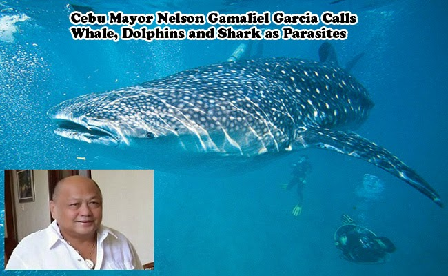 Cebu Mayor Nelson Gamaliel Garcia Calls Whale, Dolphins and Shark as Parasites