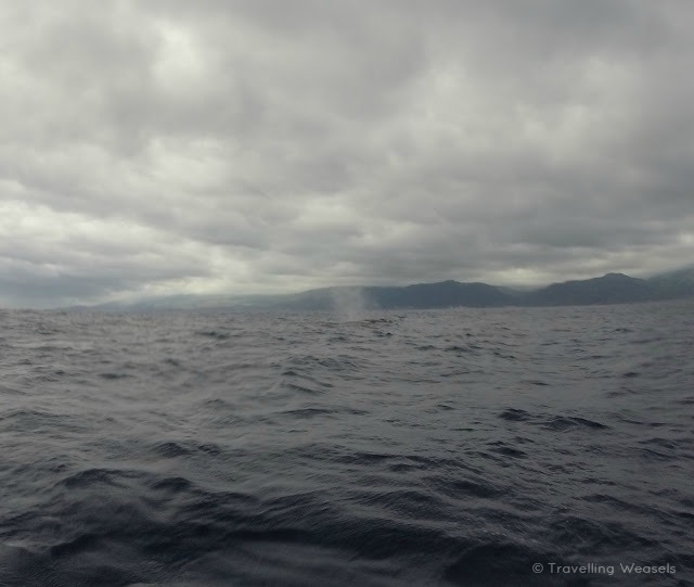 sao miguel azores whale watching
