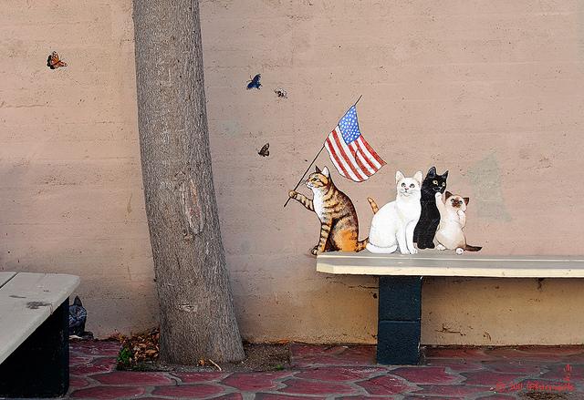 Cidade tem street art com pinturas de gatos