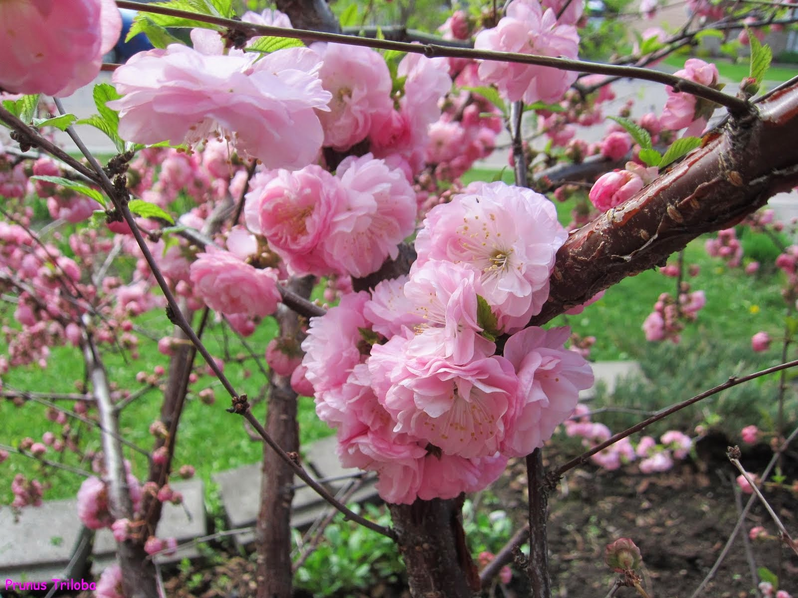 Mon autre blog / Jardinage