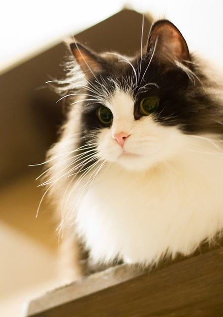 Top 10 Cat Breeds for Kids