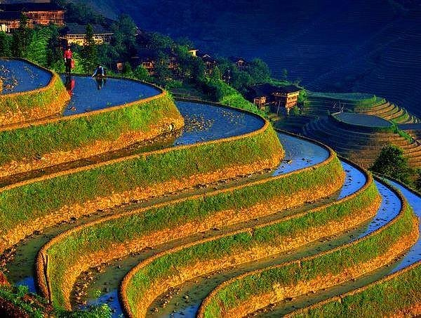 The amazing concept of rice terrace in thailand budget for Terrace cultivation