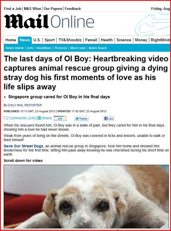 dying boy finds love of his life A boy's last wish: , and how special the moment of death can be having his dream come true, with all the love and attention that was lavished upon him.