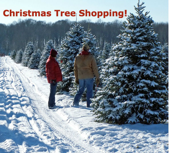 provides everything you need for a fun outinga hand saw measuring pole and best of all a red limo or silver tree wheeler that are specially - Christmas Tree Farm Colorado