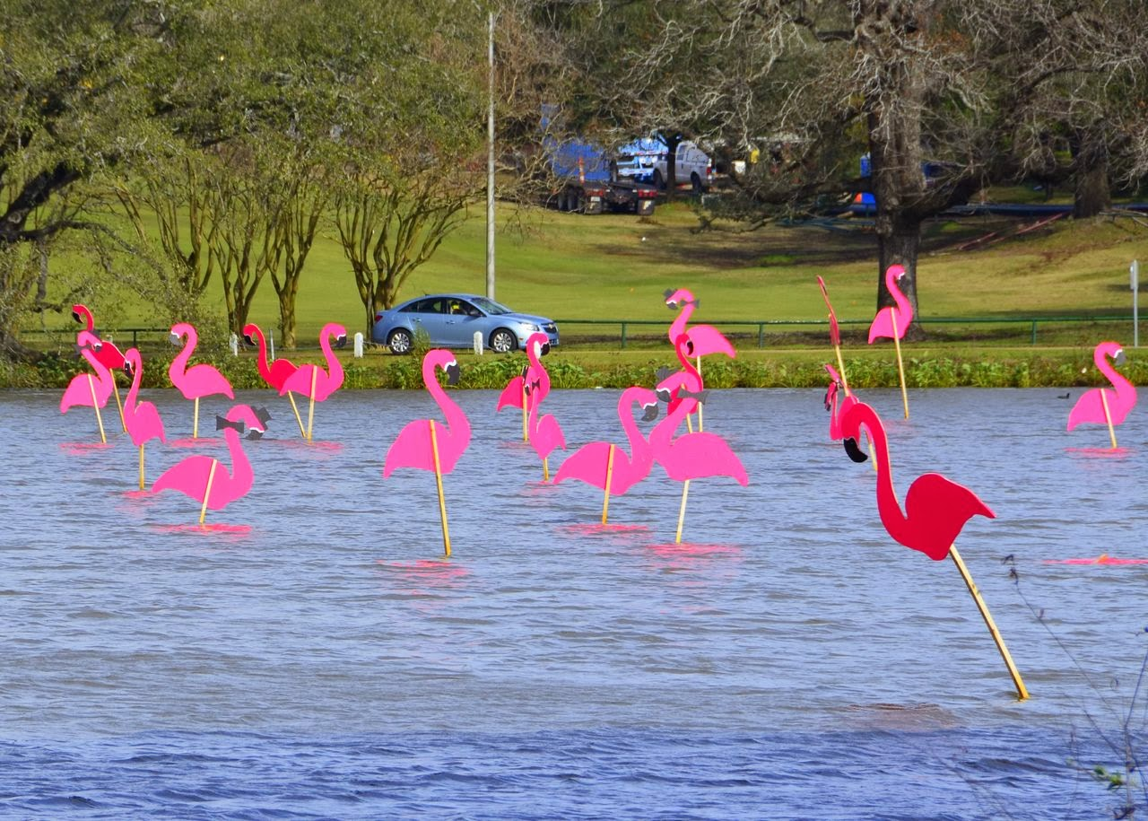 The Infamous Pink Flamingos