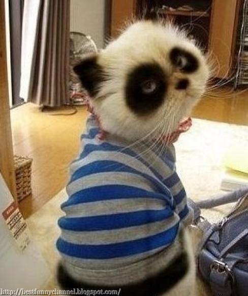 Cat panda.