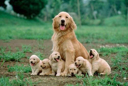 Mother dog sitting with her puppies