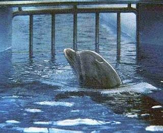 Пленный дельфин