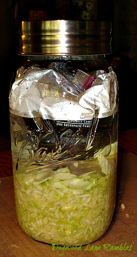 making sauerkraut